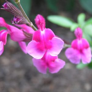 Plants for well drained soil